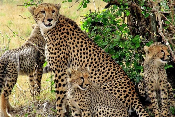 Zanzibar plus safari