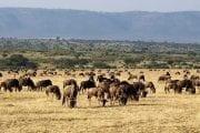 Safari Kenija, Kilimandžaro i  Zanzibar