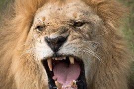 GlobeTracker putovanje safari aranzmani zanzibar
