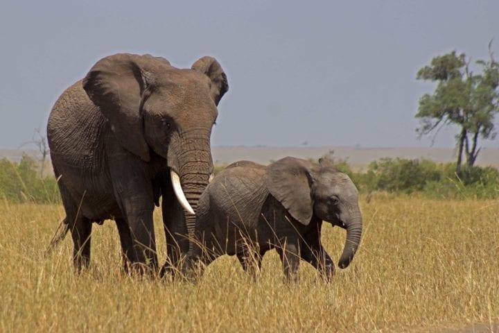 GlobeTracker Ekspedicija Afrika - Safari