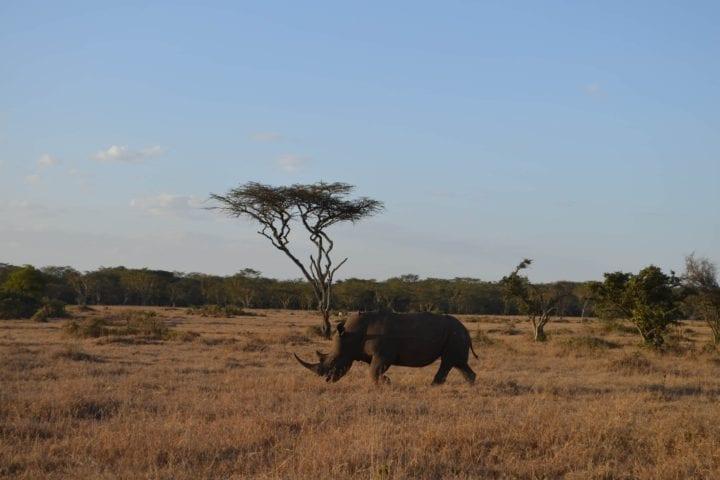 GlobeTracker Expedicija Afrika - Safari