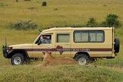 GlobeTracker Ekspedicija Afrika - Safari Lav